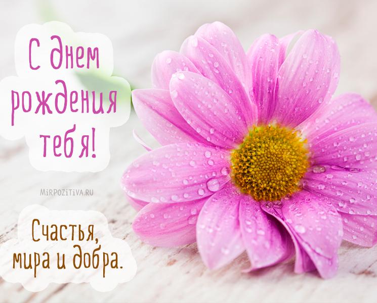 Красивые поздравления женщине с Днем рождения - Новости